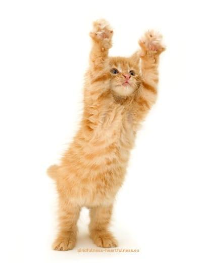 Foto van een rode zichzelf uitstrekkende kat
