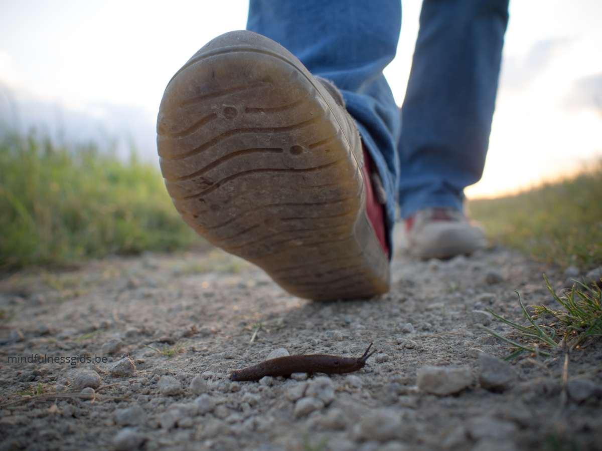foto van wandeling met beestje op grond